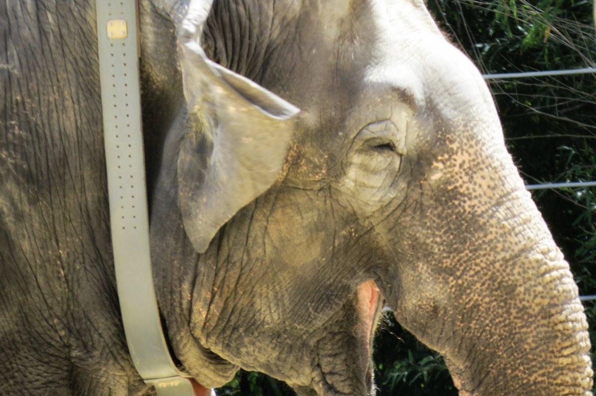 elephant Washington Zoo